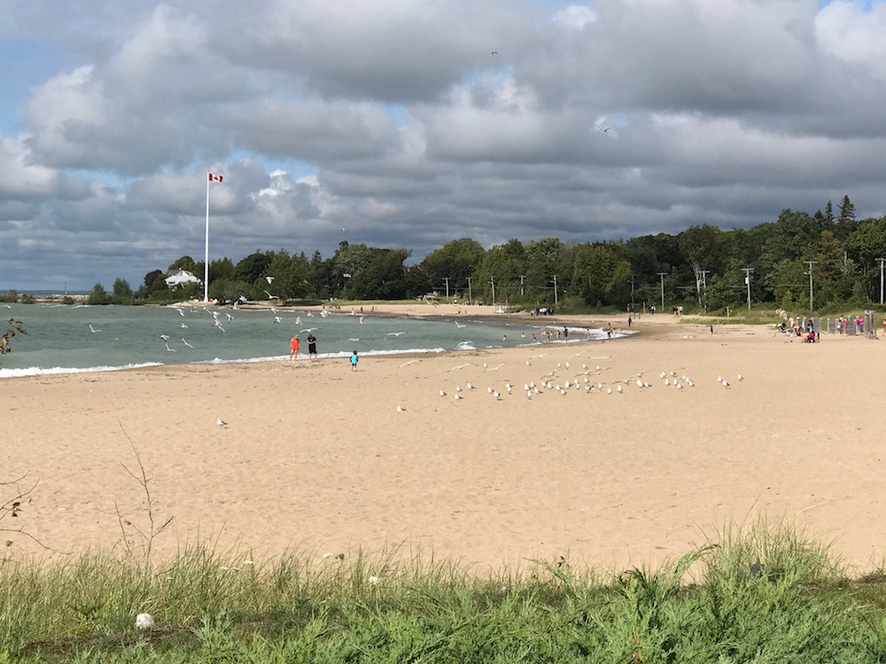seagulls and beach southampton august 2017
